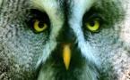 La photo du jour - Le hibou