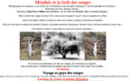 Morphée et la forêt des songes - Narbonne