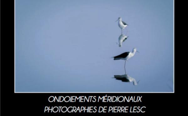 Exposition Pierre Lesc - Sète